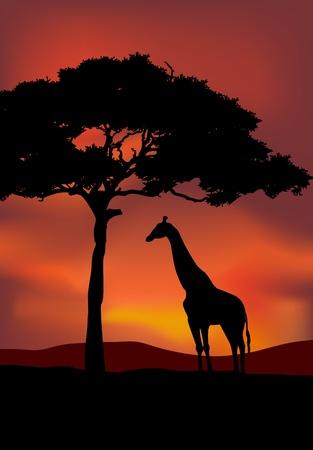 tranquility: Atardecer de fondo de �frica con la jirafa Vectores