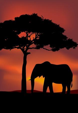 acacia: African Sunset background with elephant
