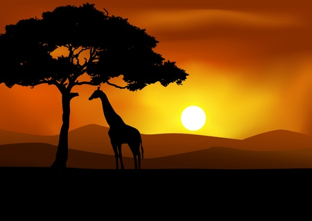 orange sunset: African Sunset background with giraffe