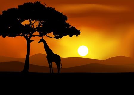 ilustraciones africanas: Atardecer de fondo de �frica con la jirafa Vectores
