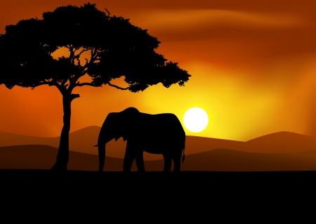 African Sunset background with elephant Stock Vector - 13497244