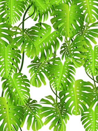 Tropical leaf background Stock Vector - 13495364