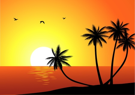 coconut leaf: Tropical beach background