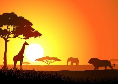 africa sunset: Safari di sfondo