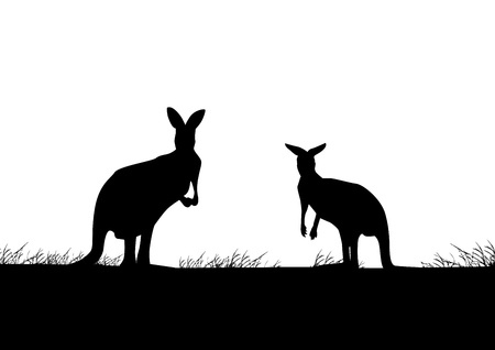australian outback: Kangaroo silhouette  Illustration