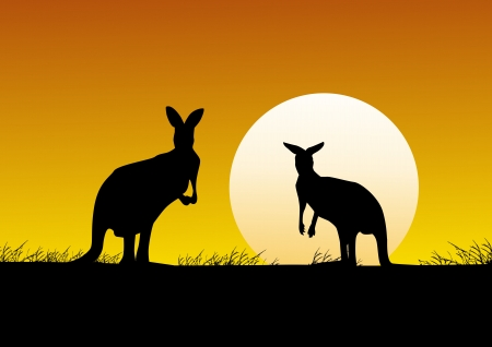 Kangaroo on the sunset background  Vector