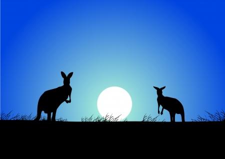 australie landschap: Kangoeroe op de zonsondergang op de achtergrond