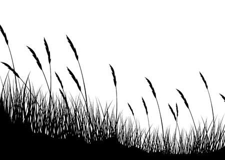 wheat grass: Grass background