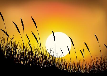 Grass Hintergrund Standard-Bild - 13726430