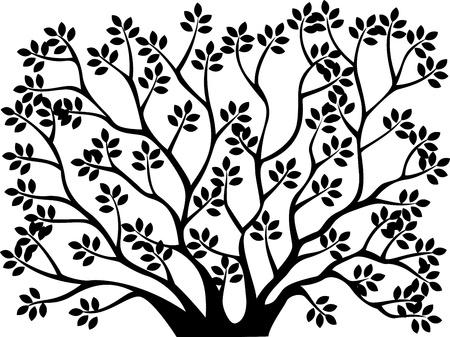 birch forest: Tree silhouette background