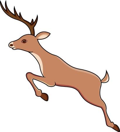 roe deer: deer jumping