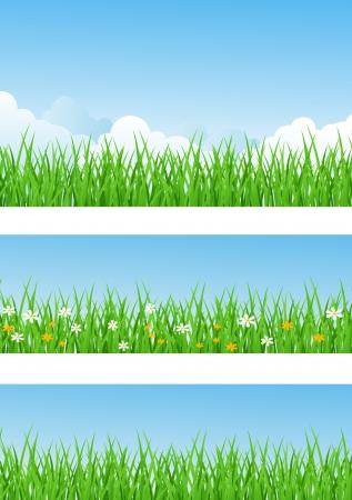 non    urban scene: Grass background