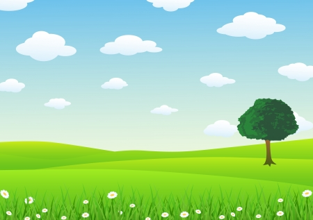 lawn: Zonsondergang in de zomer veld