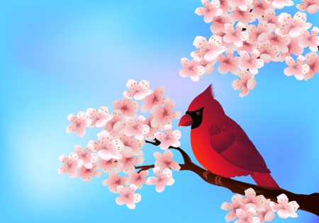 red bird sitting on cherry tree blossom  Vector