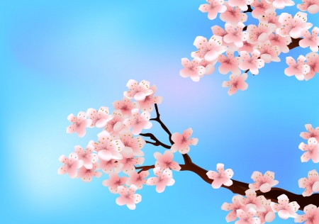 Cherry tree blossom  Vector