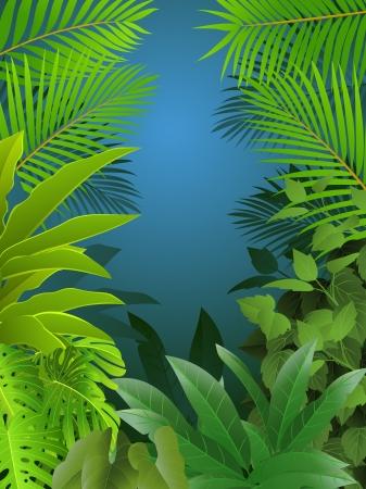 plante tropicale: Fond de la for�t tropicale Illustration