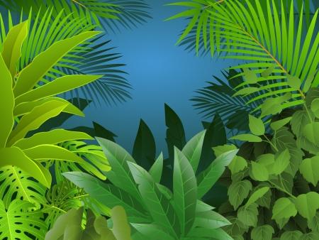 feuillage: Fond de la forêt tropicale Illustration