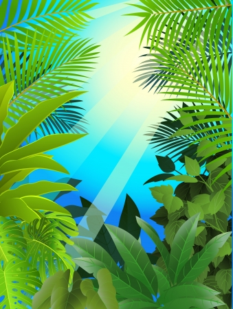 amazon forest: Tropical forest background