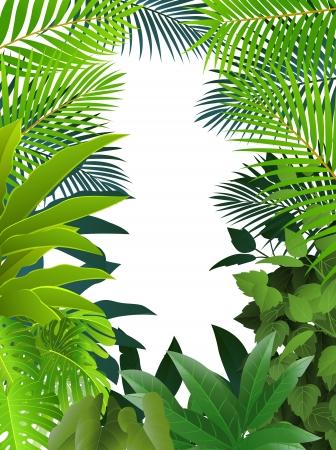 fondo luminoso: De fondo de los bosques tropicales