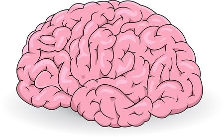 fissures: Human brain  Illustration