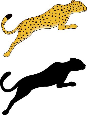 puma: Tiger salto