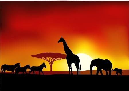 fondo luminoso: Safari de fondo