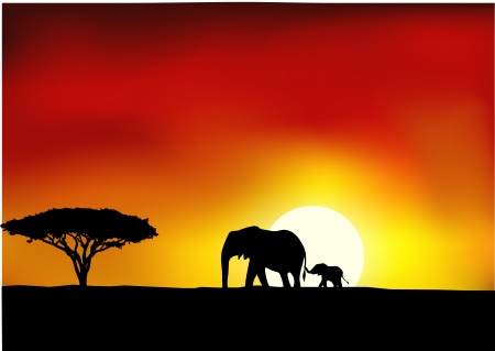 Africa sunset  Vector