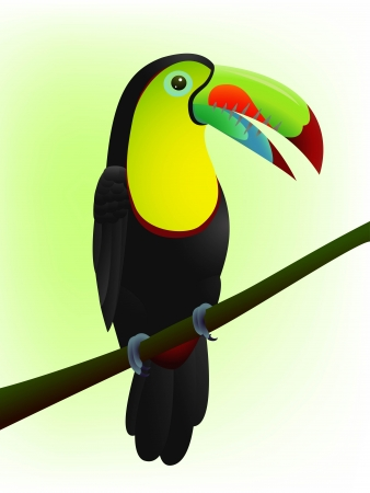 central park: vector illustration of Toucan bird