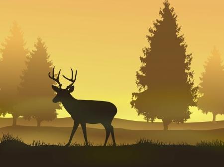 venado: ilustraci�n vectorial de los ciervos con la naturaleza de fondo