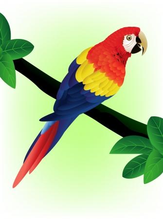 amerika papağanı: detaylı papağanı kuş illüstrasyon Çizim