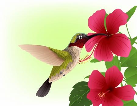 赤い花とハチドリのイラスト