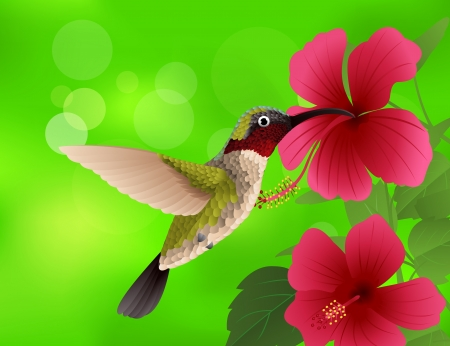 red hibiscus flower: illustration of hummingbird with red flower  Illustration
