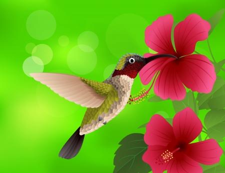 hummingbird: illustration of hummingbird with red flower  Illustration
