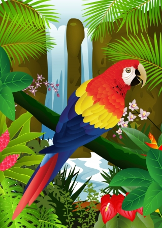 macaw: illustration of Macaw bird with waterfall background  Illustration