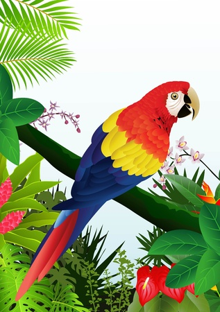 tropical bird: illustration of Macaw bird in the tropical forest