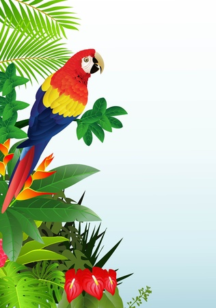 rain forest background: illustration of Macaw bird in the tropical forest