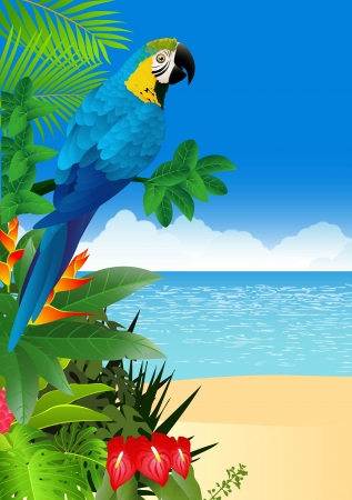 illustration of Macaw bird with tropical beach background  Vector