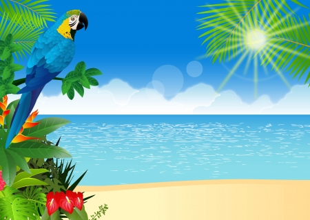 illustratio of Macaw bird with tropical beach background