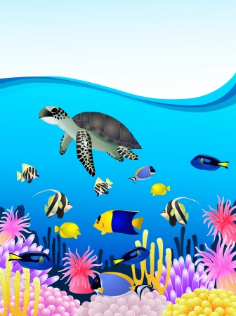 bubble sea anemone: illustration of Sea life background  Illustration