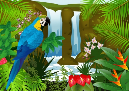 tropical bird: illustration of Macaw bird with waterfall background  Illustration