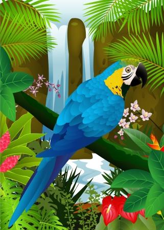 amerika papağanı: şelale arka plan ile papağanı kuş illüstrasyon Çizim
