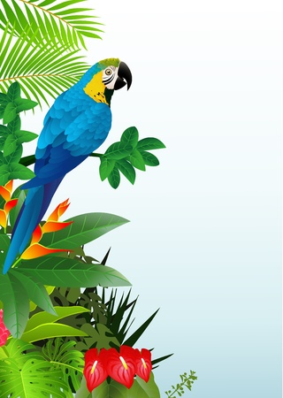 illustratio of Macaw bird in the tropical forest