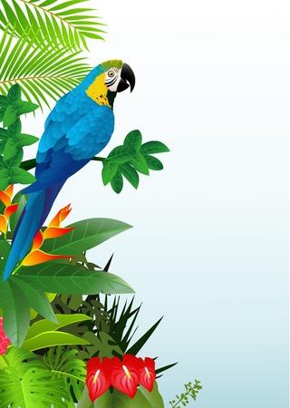 amerika papağanı: Tropikal ormanda papağanı kuş illustratio