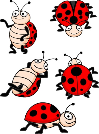 little insect: illustration of Ladybug collection