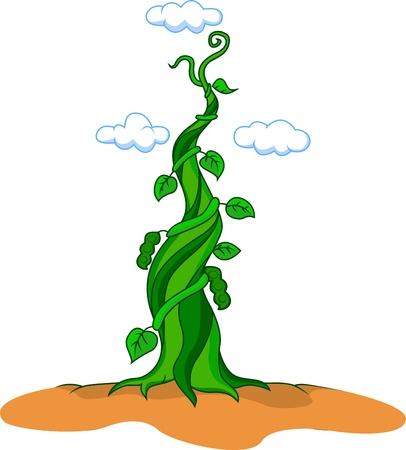 planta de frijol: ilustración de las habichuelas mágicas