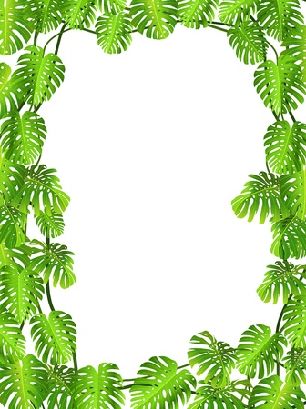 monstera: illustration of Tropical leaf background  Illustration