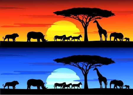 Hermosa puesta de sol de fondo sobre la vida silvestre de África