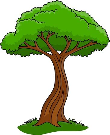 acacia: Illustration of tree isolated on white