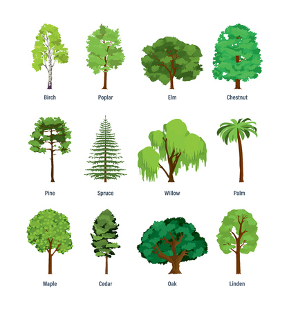 Collection of different kinds of trees. Çizim
