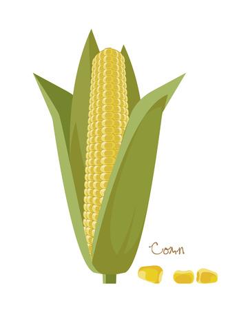 Granen, peulvruchten, planten. Rijpe maïskolven met bladeren en korrels. Stock Illustratie